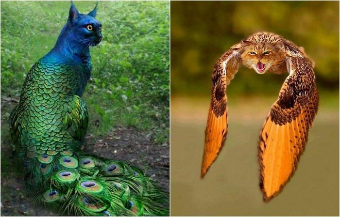Котоптицы и птицекоты, созданные с помощью Photoshop.
