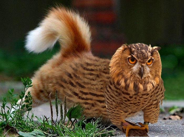 Когти, перья, острый клюв и роскошный пушистый хвост.