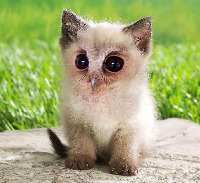 Такой малыш-гибрид смотрится довольно странно, но все-таки он милый, правда?