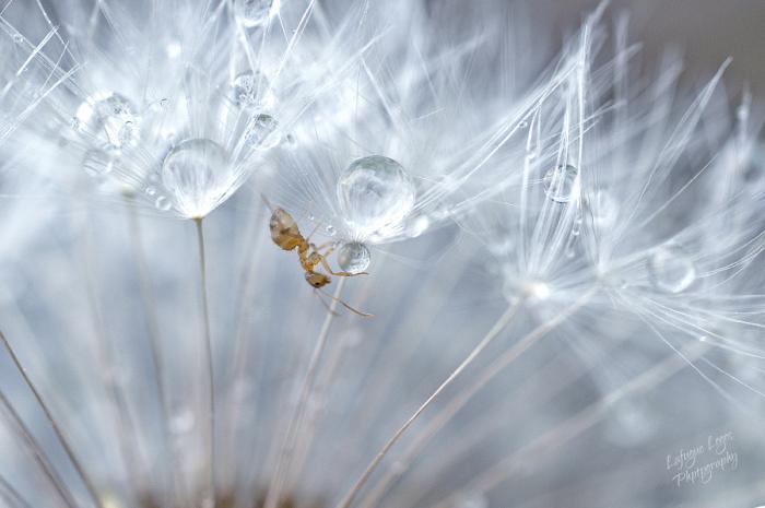 Мир насекомых. Автор фотографии: Лафюг Логос (Lafugue Logos).