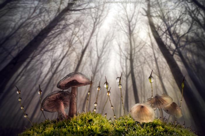 Утренний лес.<br>Автор фотографии: Альберто Гицци Паницца (Alberto Ghizzi Panizza).