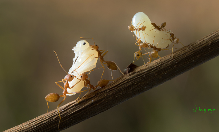 Маленькие обитатели. Автор фотографии: bug eye.