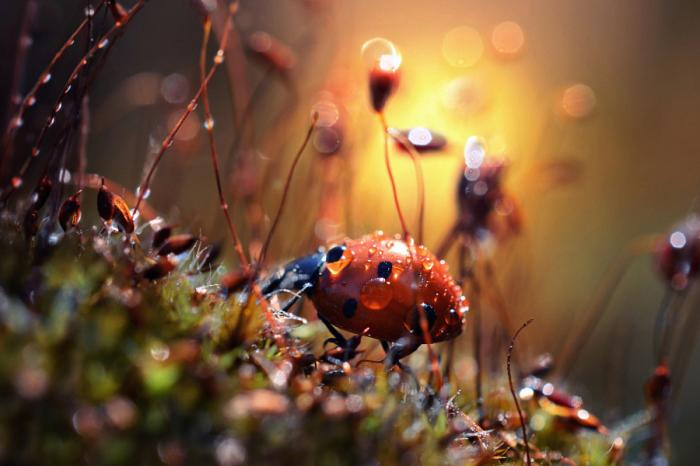 В лучах восходящего солнца. Автор фотографии: Макис Битос (Makis Bitos).