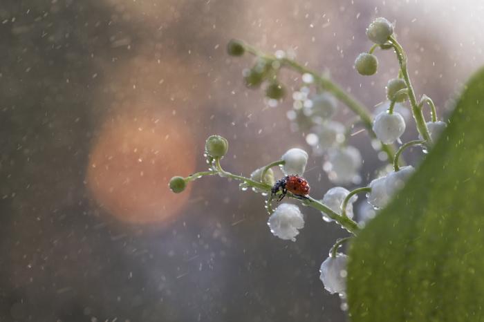 Нежные оттенки вечернего сада.<br>Автор фотографии: Таня Маркова-Ня (Tanya Markova – Nya).
