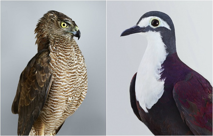 Невероятная красота птиц.