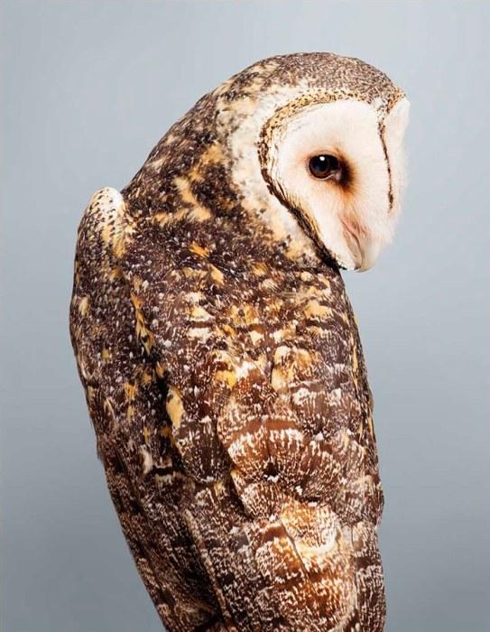Перья коричнево-бурых сов густо покрыты «веснушками» - мелкими белыми пятнышками на спине и крыльях птицы, а темными - на животе.