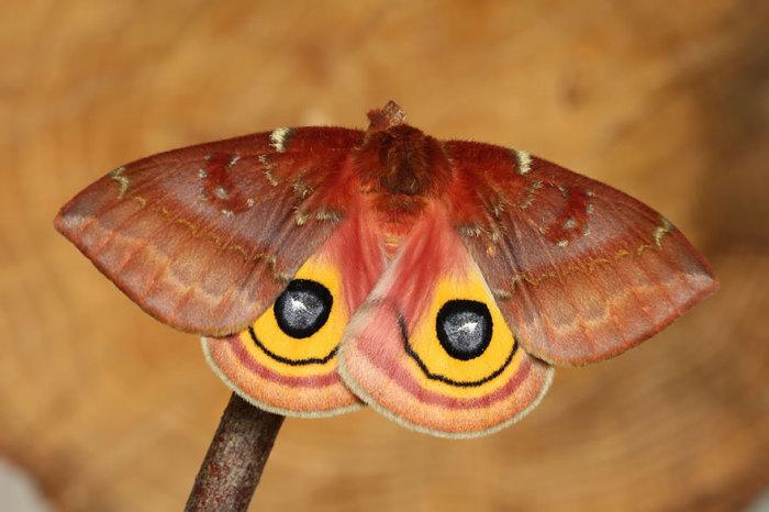 Красочная бабочка.
