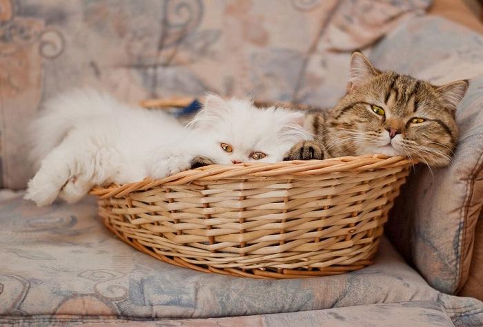 Лежанка для любимых кошек.