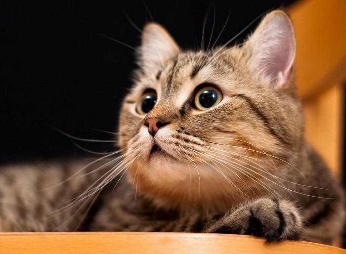 Котейка на стрёме.