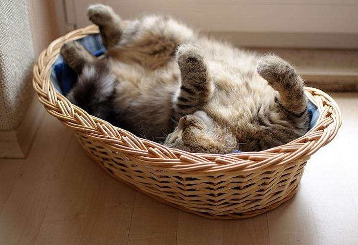 Сон в положении смирившегося животного.
