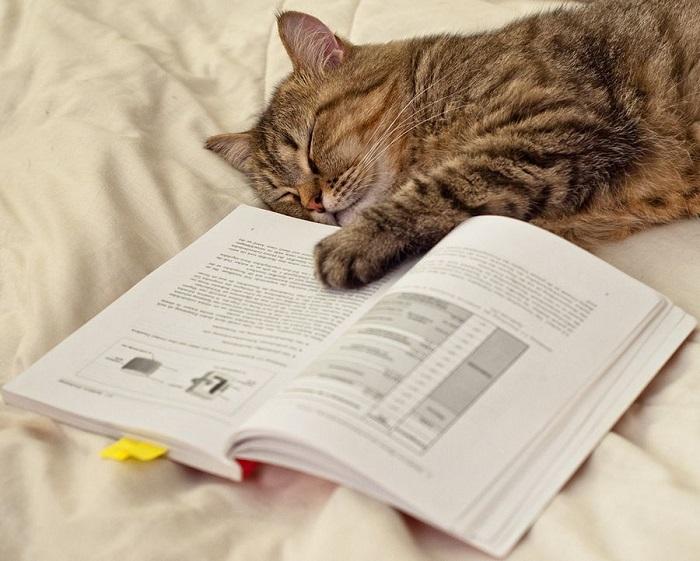 Уснул за чтением интересной книги.