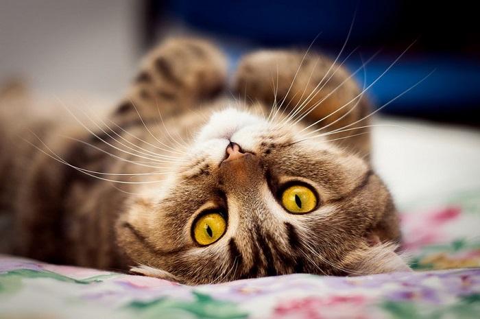 Если безотрывно смотреть кошке в глаза, можно увидеть что-то касаемо себя самого.