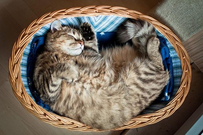 Сон котейки в лукошке.