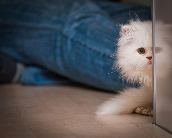 Котёнок играет в прятки.