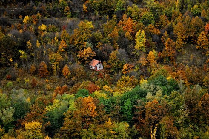 Каждодневные прогулки в осеннем лесу положительно влияют  на здоровье человека.