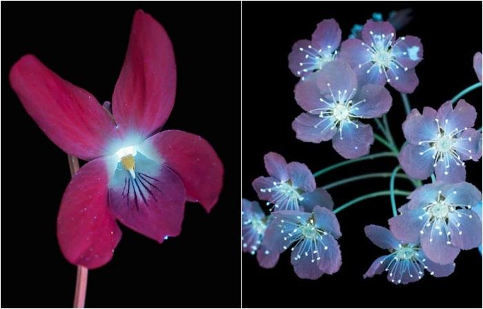 Цветы в ультрафиолете.