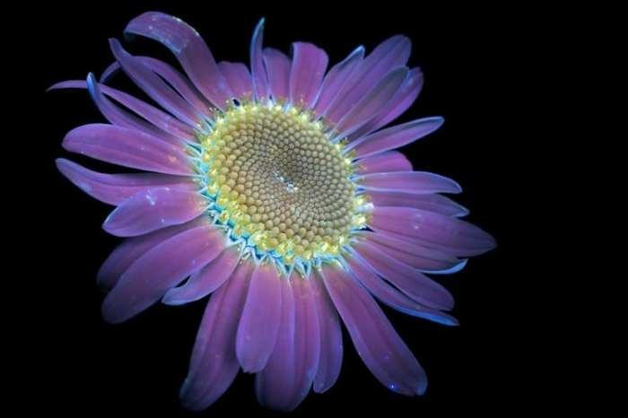 Скрытое цветочное великолепие.