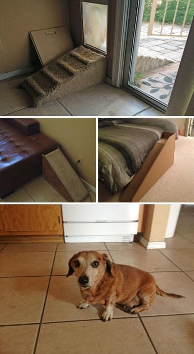 Заботливые хозяева выстроили лесенки для того, чтобы их пес мог добраться до пункта назначения.