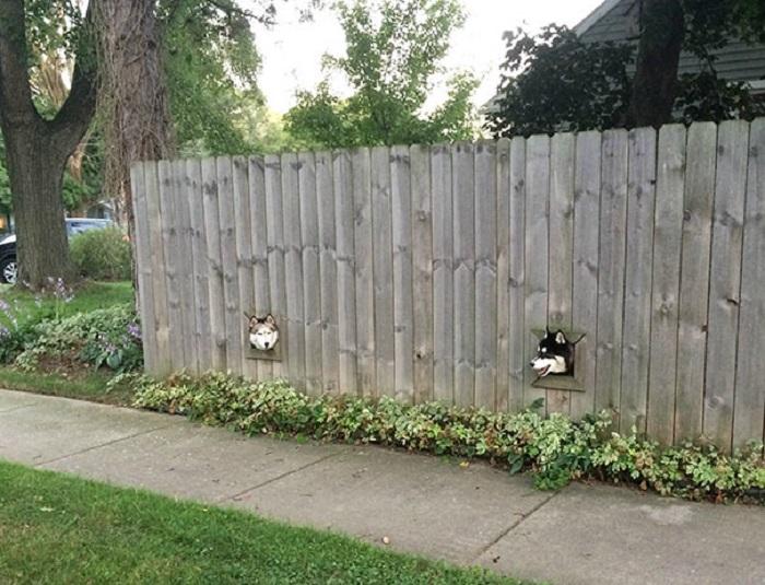 Небольшие окошки в заборе для друзей-компаньонов.