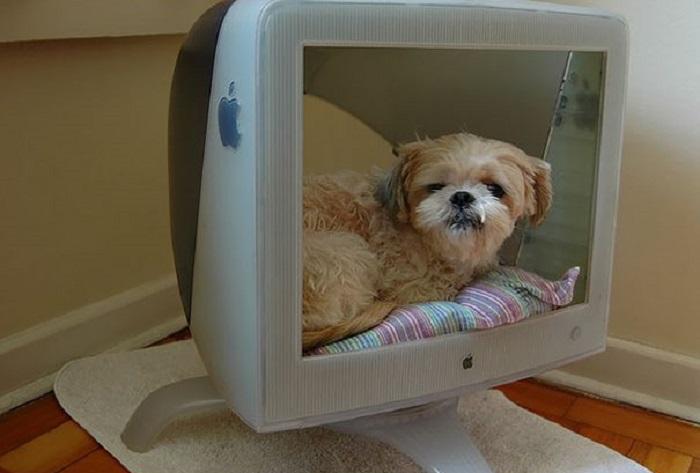 Уютный новый телевизор Apple для кошек и небольших собак.