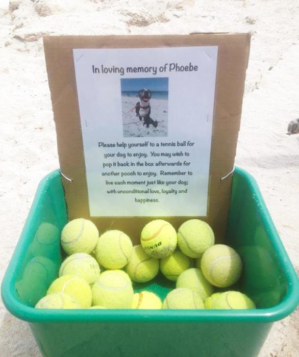 Хозяин собаки по кличке Фиби в память о ней, на пляже, выставил коробку с теннисными мячиками.