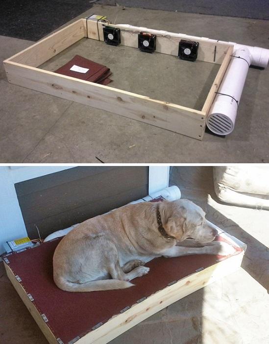 Владелец этой собаки обеспечил любимцу прохладу в любое время.
