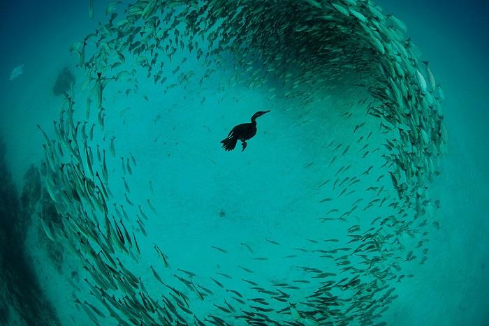 Победитель в категории «Профессиональный фотограф», Крис Гаг (Chris Gug).