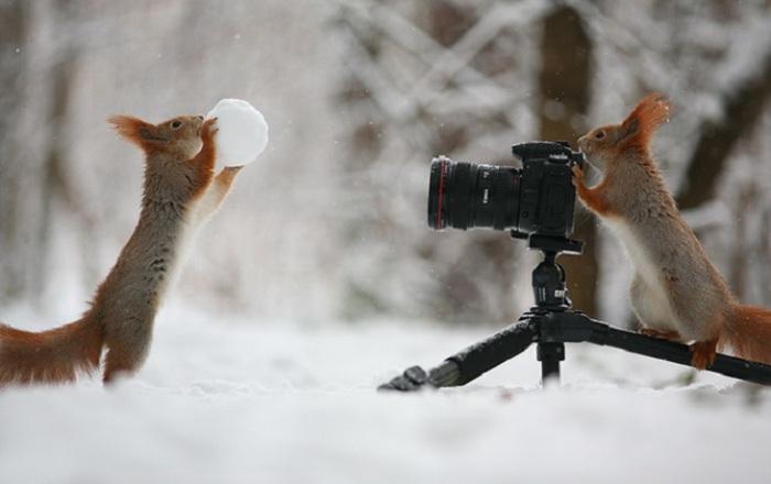 Фотосессия играющихся бельчат. Фотограф Вадим Трунов (Vadim Trunov). Терпение, шишки и орешки помогли ему привлечь к съёмке таких очаровательных моделей.