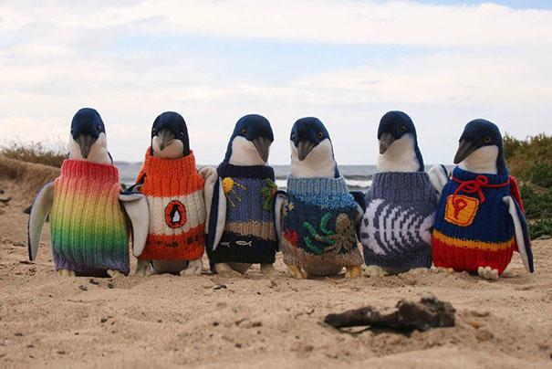 Шерстяные свитера не только согревают пингвинов, но и мешают им склёвывать с перьев опасные для их здоровья нефтепродукты.