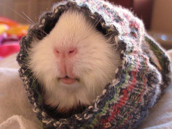 Домик-свитер и тепло и уютно.