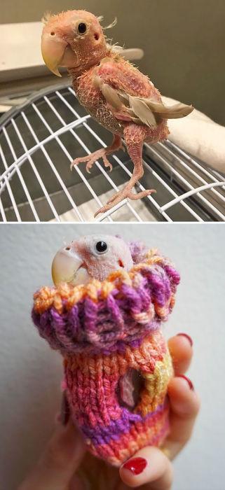 Подарки от людей, которые посылали этой птице свитера, чтобы спасти его от замерзания.