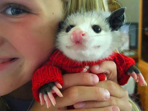 В крошечном красном свитере.