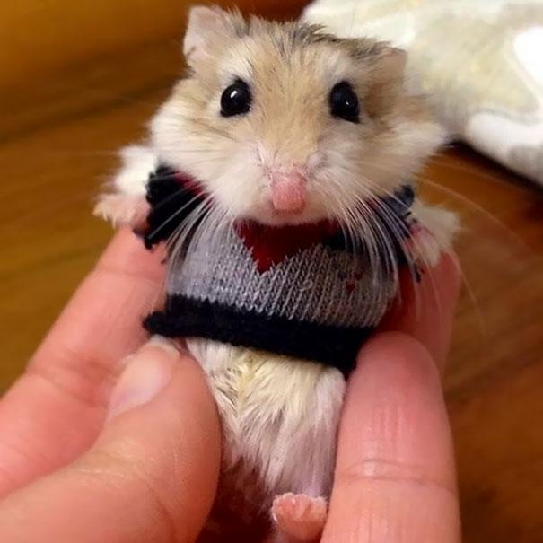 Шикарный свитерок для хомки.