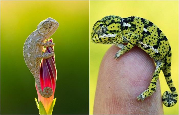 Удивительное и невероятное творение природы.