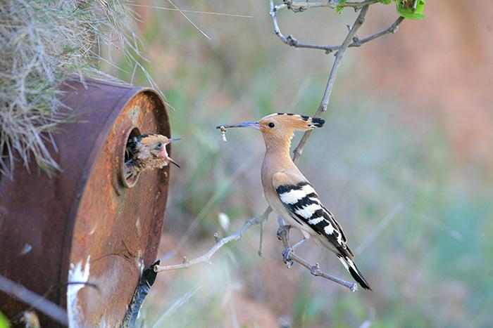 Птица, погруженная в заботу о малыше.
