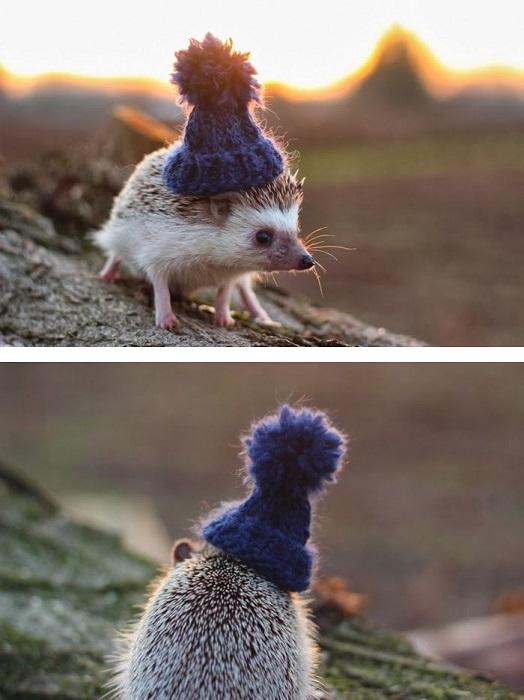 Няшный ёжик в шапке.