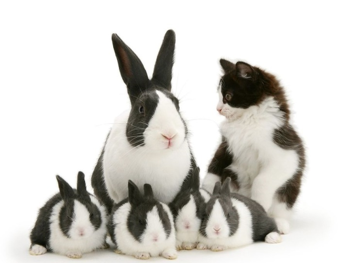 Бело-чёрное семейство.