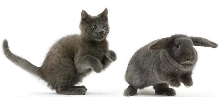 Кот, который любит повторять за кроликом абсолютно все.