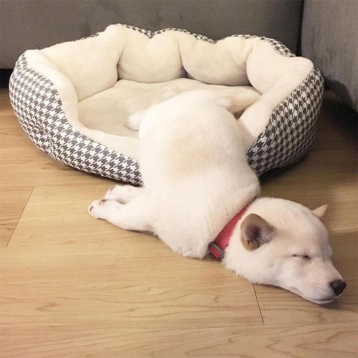 Где упал, там и уснул.