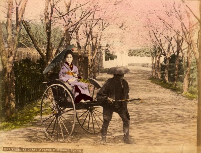 Вишневые деревья в Мукодзима были посажены по приказу восьмого сегуна Ёсимунэ.