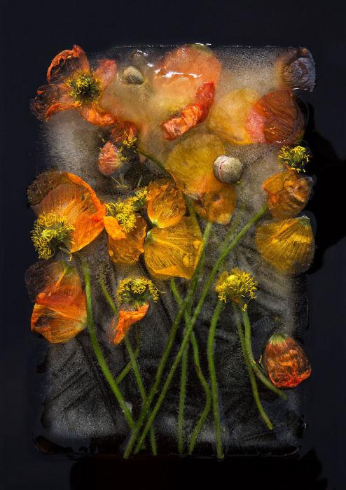 Цветы в ледяной гробнице.