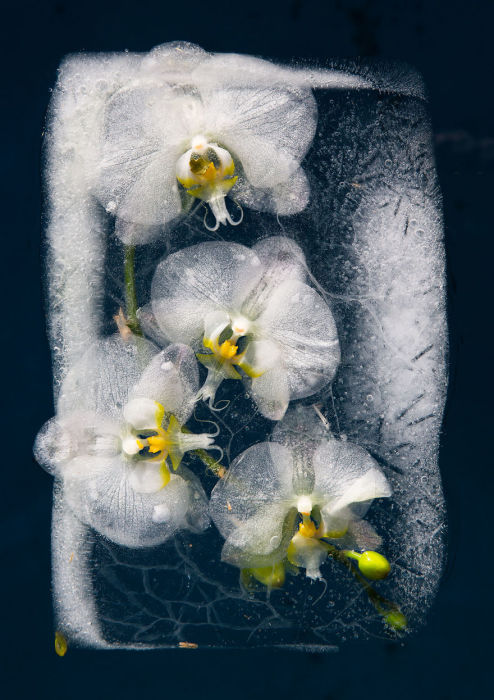 Последнее дыхание скованных во льду растений.