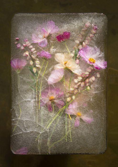 Дышащие цветы во льду.