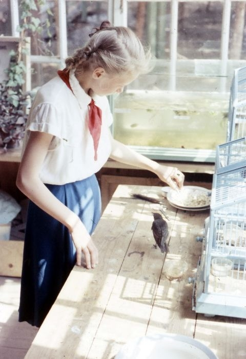 Школьница кормит птиц.