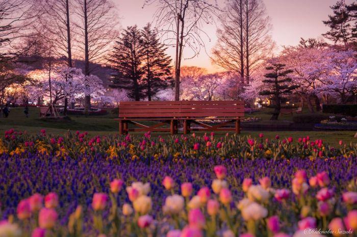 Закат в уютном японским парке в префектуре Сидзуока.