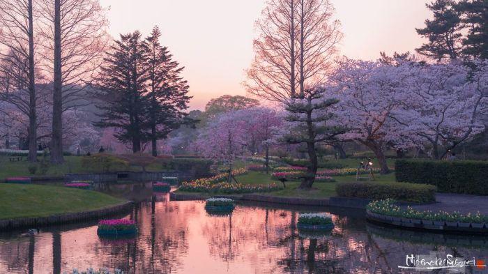 Весна – самое красочное время года в Японии.