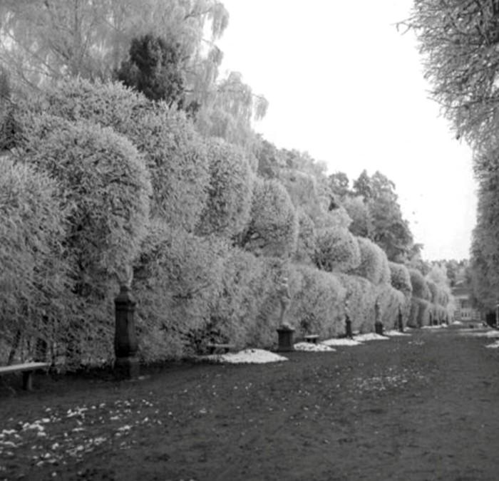 Усадьба Кусково в зимнее время.