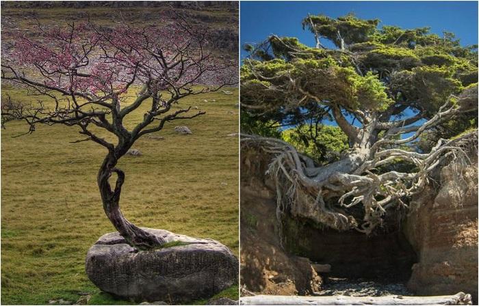 Очень жизнелюбивые деревья.