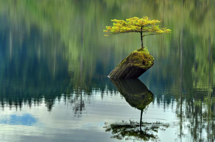 Очаровательный бонсай, который с заботой и любовью создала сама природа.