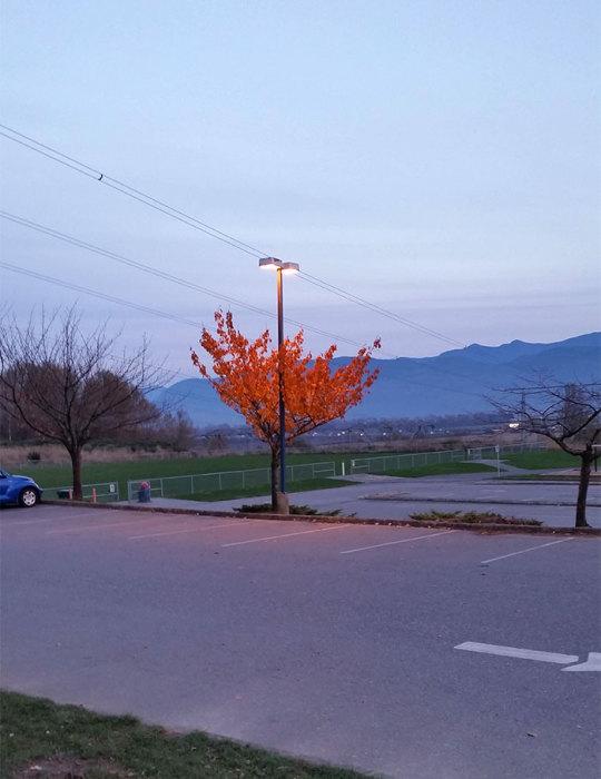Из-за света, падающего от фонарного столба, дерево не сбросило нарядные листья.